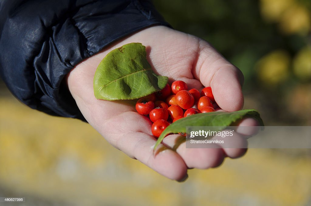 Nature's fruits : Stock Photo