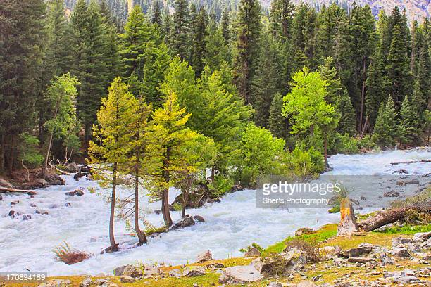 nature's hugg - swat valley stock pictures, royalty-free photos & images
