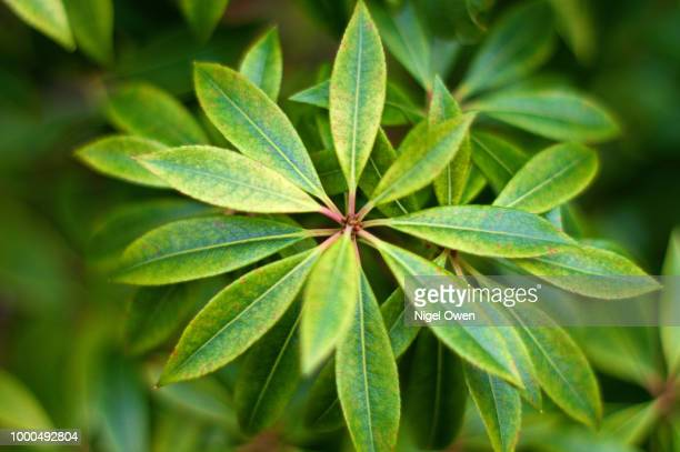 natures pattern - nigel owen stock pictures, royalty-free photos & images