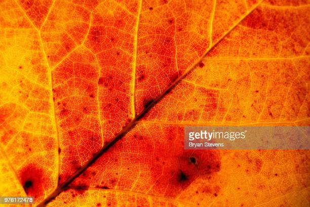 nature's veins - bryan stevens stock pictures, royalty-free photos & images
