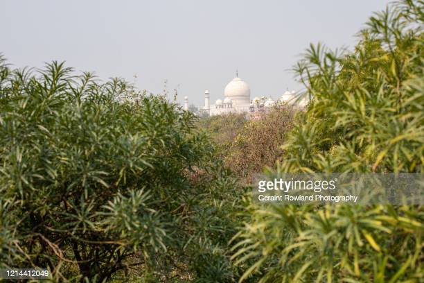 nature's view of the taj mahal - celebrity death stock pictures, royalty-free photos & images