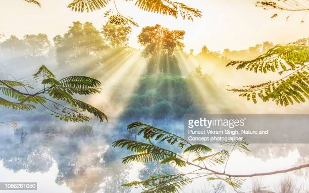 a nature's window showing ethereal beauty of foggy sunrise with sunrays glowing through the forest of panvel, navi mumbai - idyllic stock-fotos und bilder