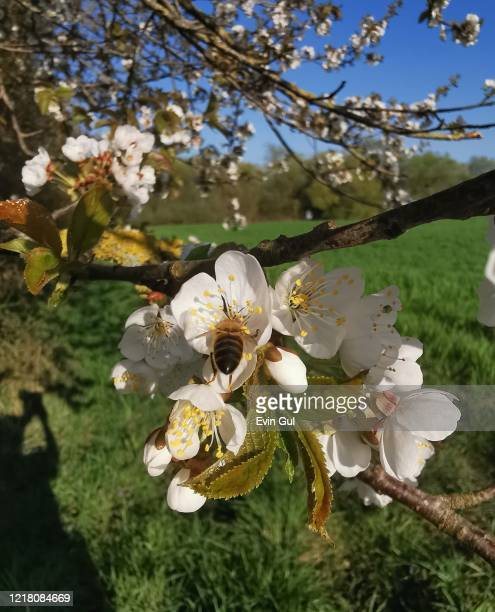 natur-flowers-spring - natur photos et images de collection