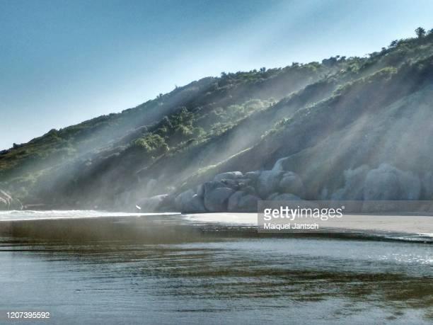 naufragados beach (praia de naufragos) in florianópolis, santa catarina state - brazil - mata atlantica stock-fotos und bilder
