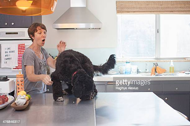 Naughty pet dog on top of kitchen counter