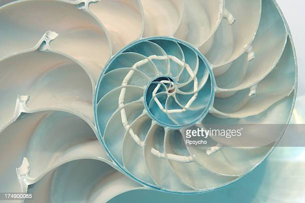 nautilus - natural pattern stock pictures, royalty-free photos & images