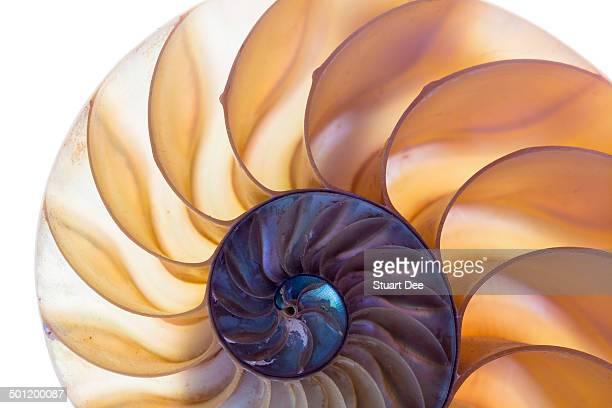 Nautilus shell closeup