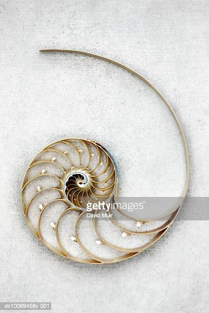 Nautilus shell, close-up