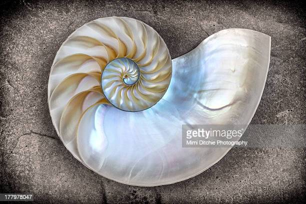 Nautilus Shell On A Textured Background