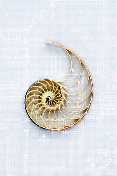 Nautilus shell on blueprint, close-up