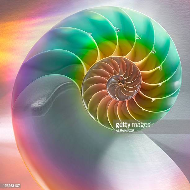 nautilus shell - nautilus stock pictures, royalty-free photos & images