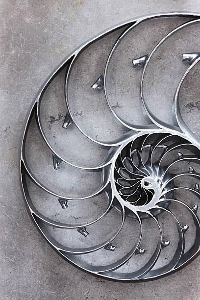 nautilus shell,