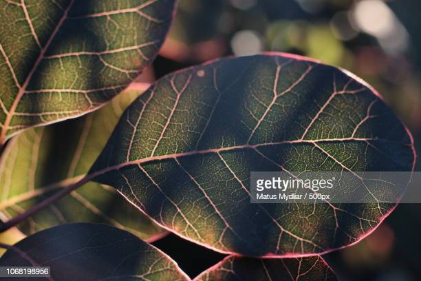 nautre photograph with close-up of leaf with shadows - nautre stock pictures, royalty-free photos & images