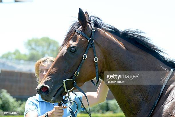 Navagio after winning Doriemus Handicap at Flemington Racecourse on January 28 2017 in Flemington Australia