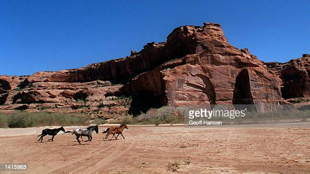 Navajo horses gallop between the cliffs of Canyon de Chelly April 12 1996 near Chinle AZ The canyon located on the Navajo Indian Reservation is 26...