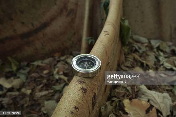 navigational compass on tree - geografia fisica foto e immagini stock