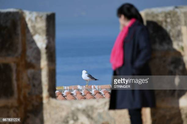 Nawel Derradji a doctoral student in animal ecology at the University of Bab Ezzouar in Algiers observes a Yellowlegged Gull perched on a building...