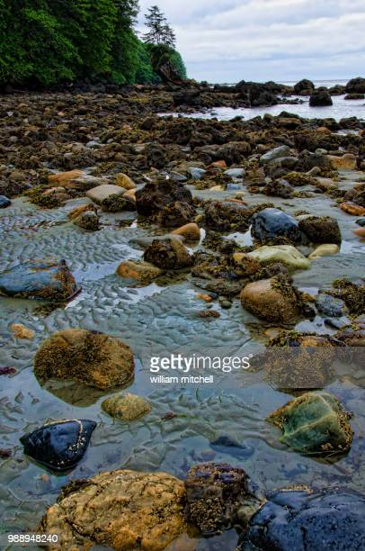 neah bay wa - brook mitchell stock pictures, royalty-free photos & images