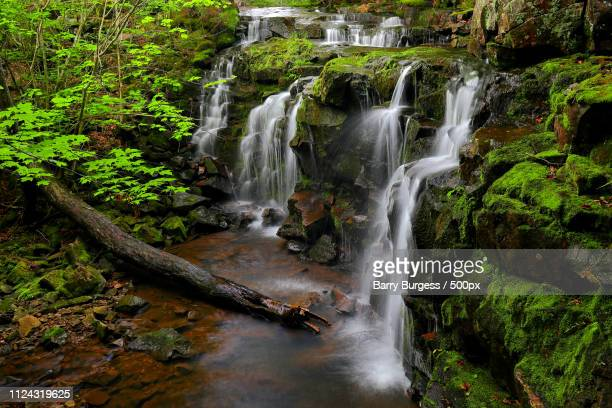 nealy brook falls iii - barry wood stock pictures, royalty-free photos & images