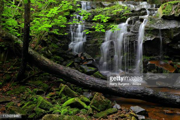 nealy brook falls iv - barry wood stock pictures, royalty-free photos & images