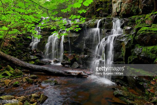 nealy brook falls - barry wood stock pictures, royalty-free photos & images