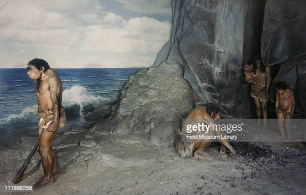 Neanderthal family diorama mid to late 20th century On exhibit between 1933 and 1991