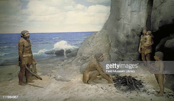 Neanderthal Family diorama late 1960s or early 1970s On exhibit at the Field Museum Chicago between 1933 and 1991 The figures were rendered by...