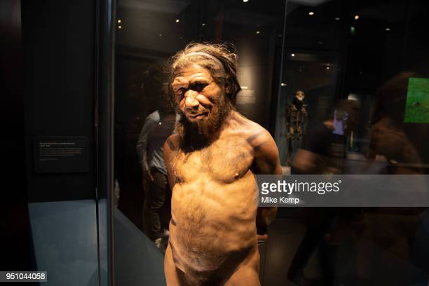 Neanderthal man at the human evolution exhibit at the Natural History Museum in London, England, United Kingdom. The museum exhibits a vast range of...
