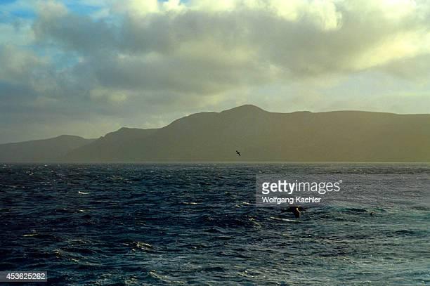 Near Macquarie Island Giant Petrel In Flight