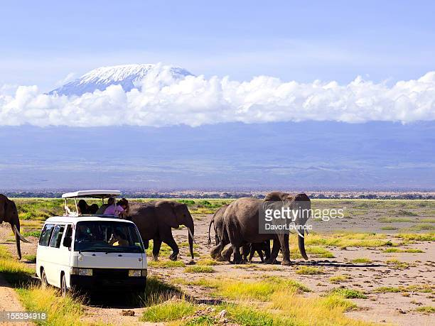 near miss - amboseli stock photos and pictures