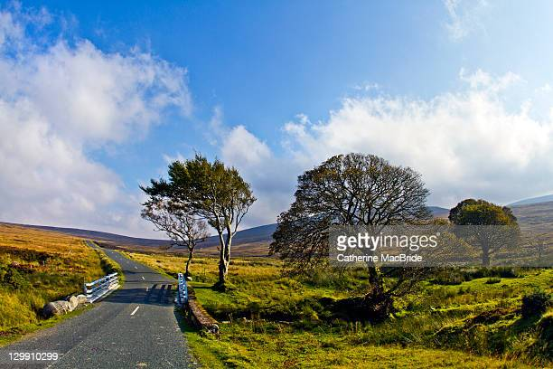 near sally gap, wicklow - catherine macbride stock pictures, royalty-free photos & images