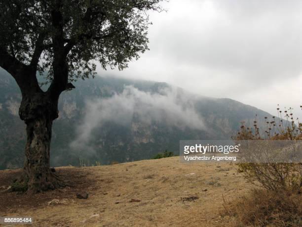 near the monastery of qozhaya, kadisha/qadisha holy valley, lebanon - argenberg fotografías e imágenes de stock