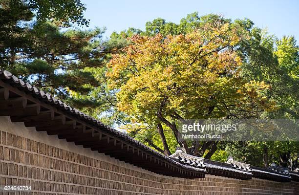 Near the wall of Deoksugung Palace , Fall foliage in Seoul , South Korea