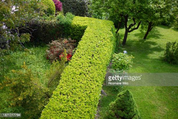 neatly cut hedge in italian garden, overhead view - cutting stock pictures, royalty-free photos & images