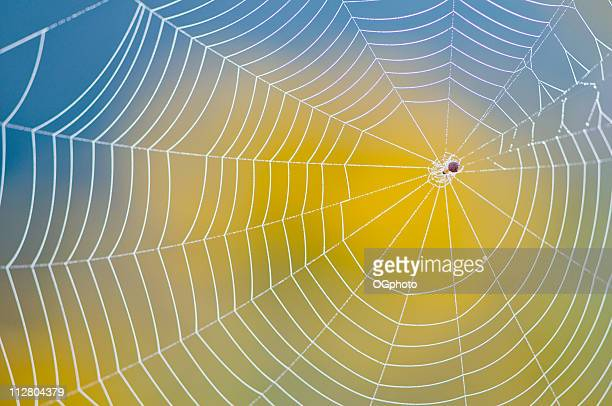 Neatly made spider web against blurred yellow and blue back