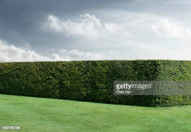 Neatly trimmed hedges and lawn under cloudy sky