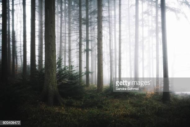 Nebelstimmung im Wald