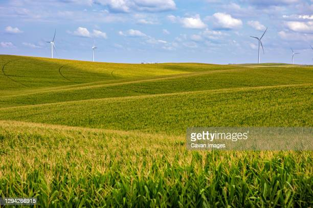 nebraska corn fields with wind turbines - midwest usa stock pictures, royalty-free photos & images