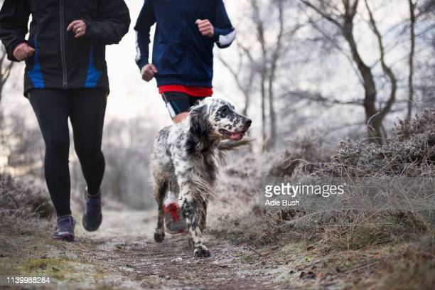 neck down of mother and son running with dog - bush dog stock pictures, royalty-free photos & images
