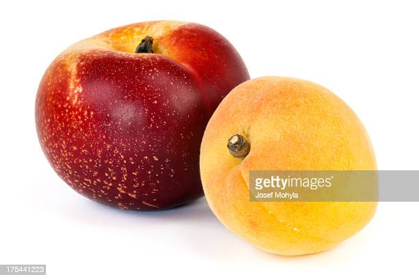 Nectarine and Apricot