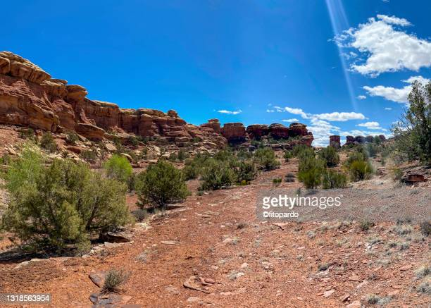 needles area of the needle of canyonlands national park from below - fitopardo stock pictures, royalty-free photos & images