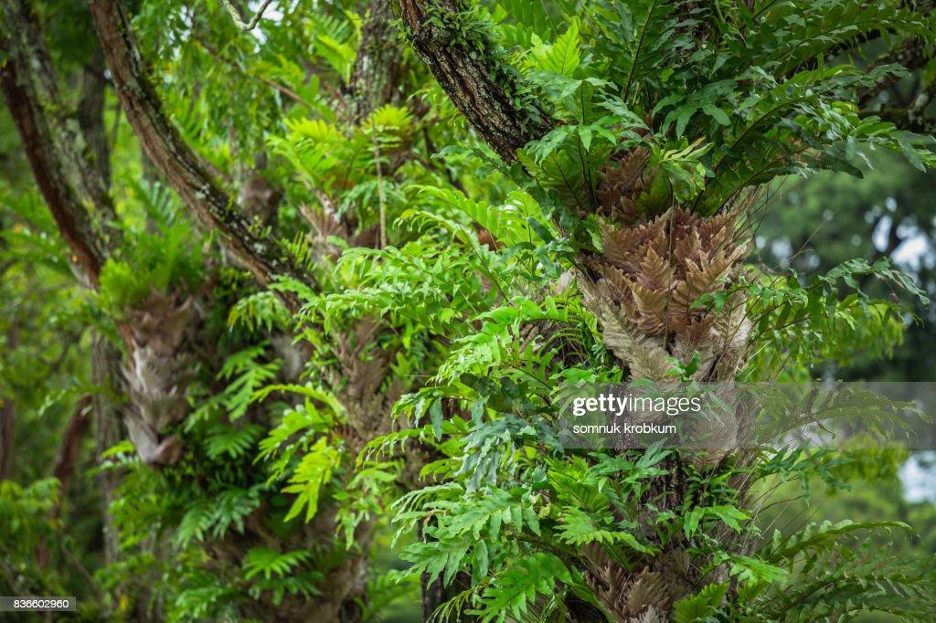 Neem tree in rainy season : Stock Photo