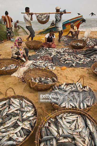 Negombo is one of the liveliest fishing village on earth.