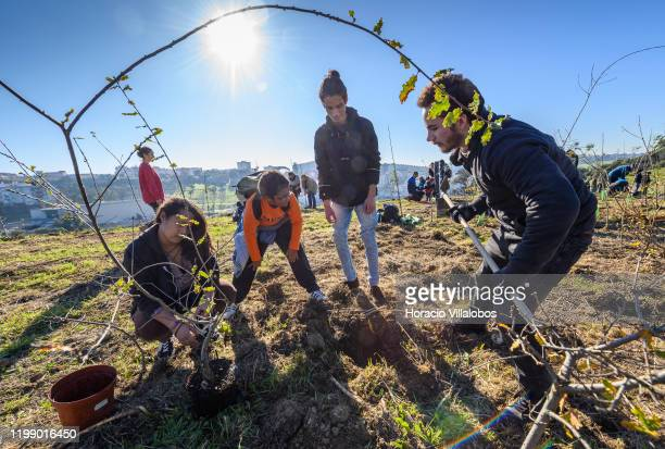 Neighbors and environmentalists join efforts to plant trees in an Ameixoeira park as part of the initiatives included in Lisbon European Green...