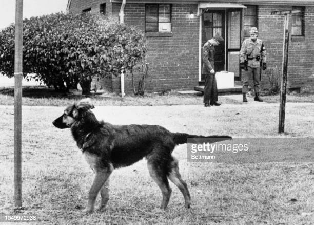 Neighbor's dog remains tied to a clothes-line post here behind the home of Army Captain Jeffrey MacDonald as a watchful MP stands guard at the door....