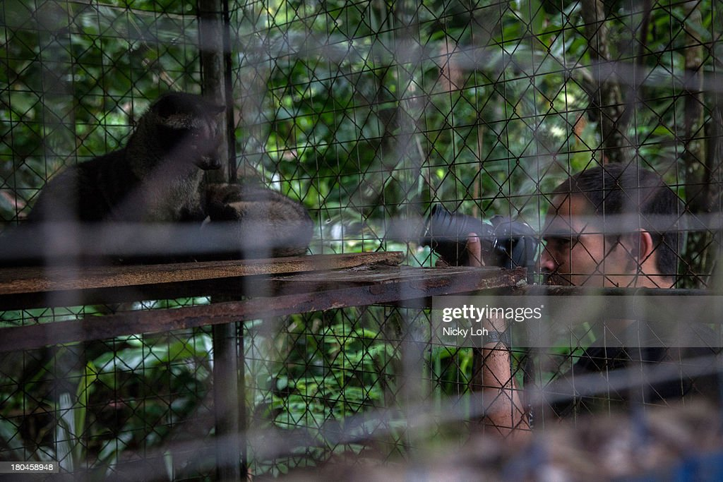 Neil observes a civet cat in a cage inside a 'Kopi Luwak' or Civet coffee farm and cafe on May 27, 2013 in Tampaksiring, Bali, Indonesia. World Society for the Protection of Animals (WSPA) commissioned research showing the true cost of the world's most expensive coffee, thousands of civets are being poached from the wild, kept in inhumane, conditions, and farmed to meet the growing global demand for civet coffee. The BBC are broadcasting a documentary on the Civets as part of their 'Our World' series this evening at 2300.