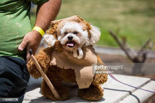 Nelda the dog appears in cosplay as an Ewok from Star Wars at ComicCon Museum on July 07 2019 in San Diego California