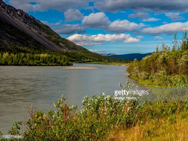 nenana river - alaska - cantwell stock pictures, royalty-free photos & images