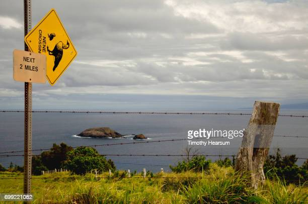 nene (hawaii state bird) crossing sign with ocean beyond - timothy hearsum imagens e fotografias de stock