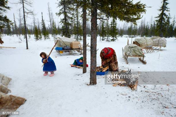 nenets family collecting firewood - cliqueimages stockfoto's en -beelden